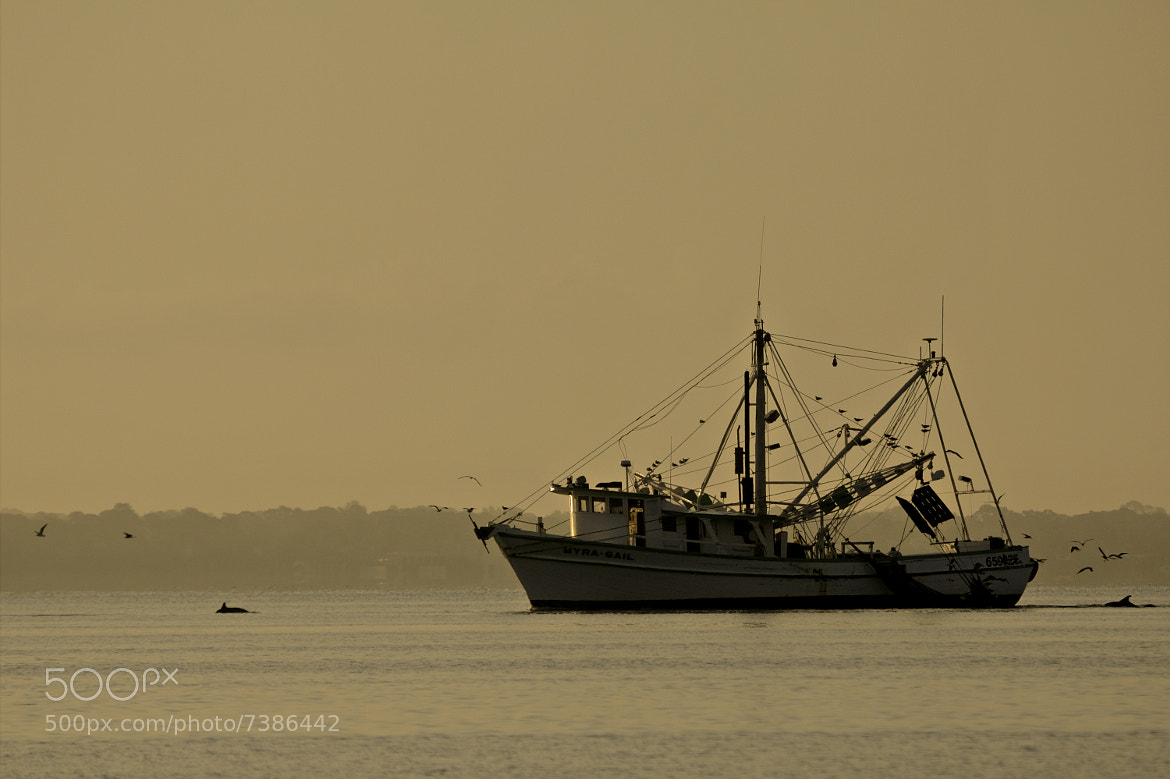 Photograph Early Morning Escort by Dorothy Cunningham on 500px