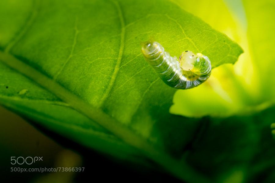 Photograph Baby caterpilla by Gildas Cuisinier on 500px