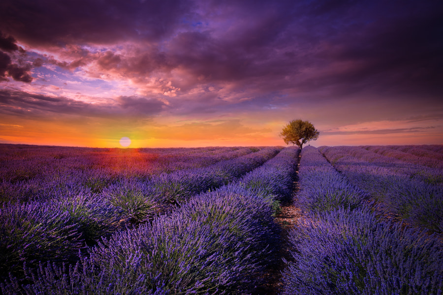 Photograph Lavender Sunset by Marco Carmassi on 500px