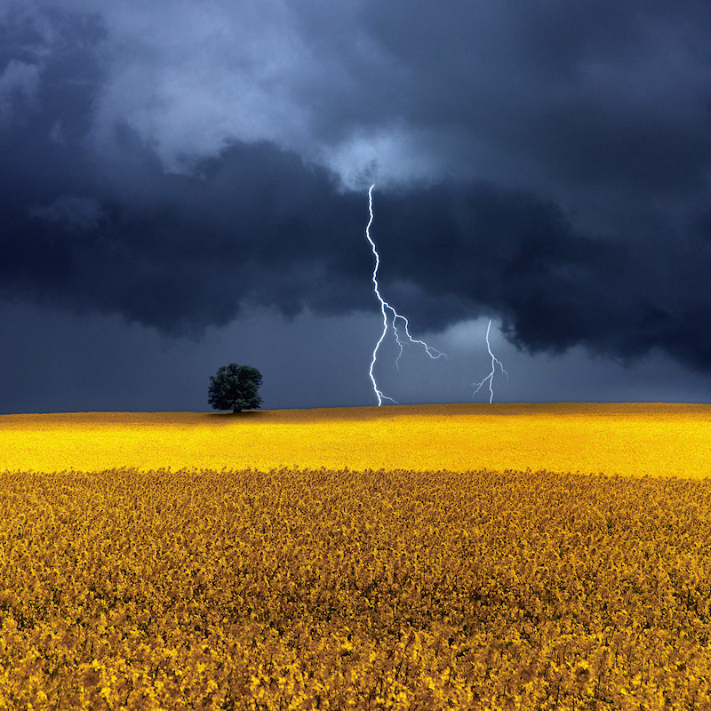 Photograph Storm Over Rapeseed Fields by Carlos Gotay on 500px
