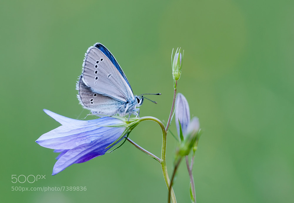 Photograph the blue by Bernhard Lagler on 500px