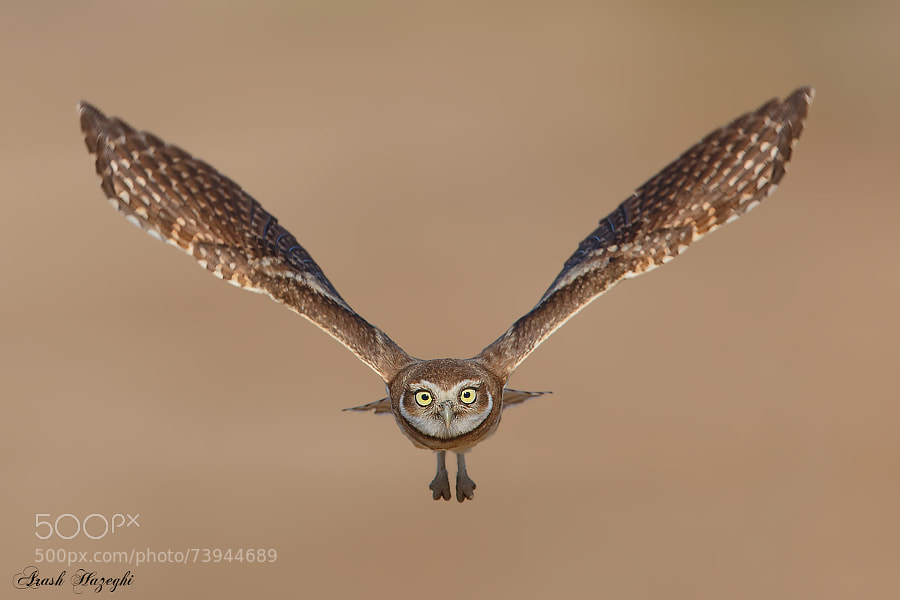 Photograph The Dinsey owl in technicolor by Ari Hazeghi on 500px
