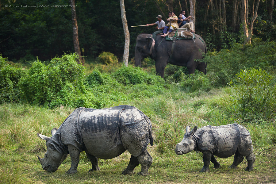The Rhinoceros Family (Chitwan National Park, Nepal) by Anton Jankovoy on 500px.com