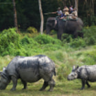 Постер, плакат: The Rhinoceros Family Chitwan National Park Nepal