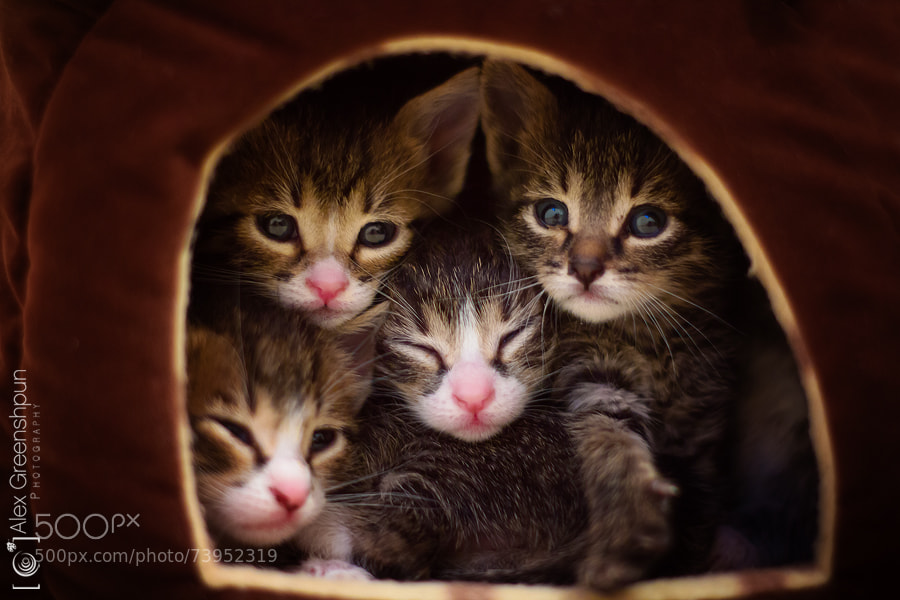 Photograph House of Furballs by Alex Greenshpun on 500px