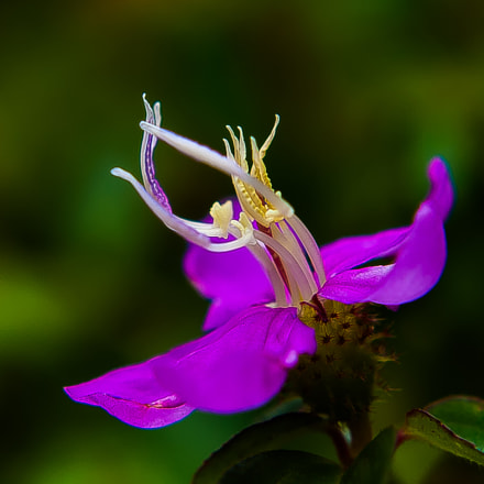 Purple Dance