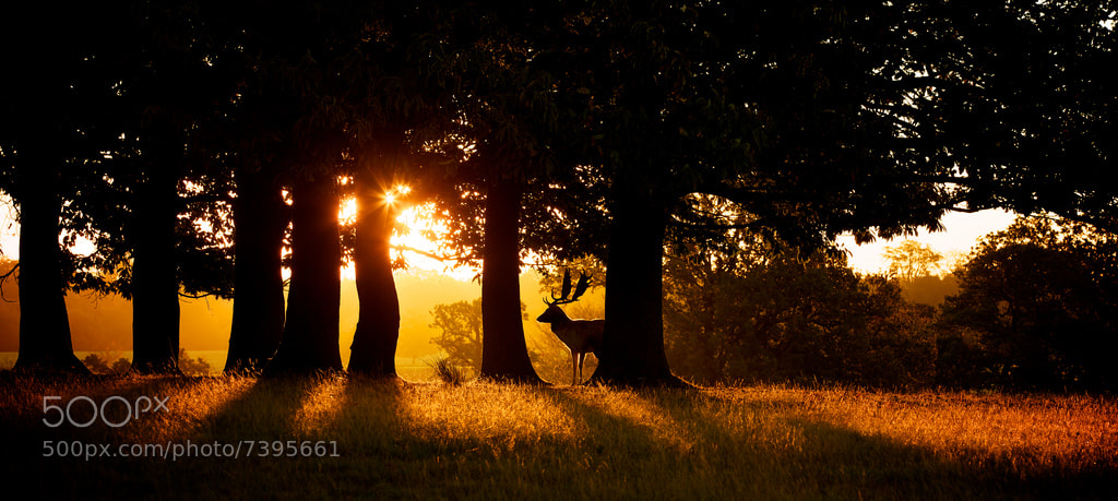 Photograph sunrise by Mark Bridger on 500px