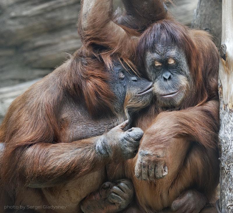 I love you, my baby by sergei gladyshev on 500px.com