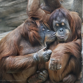 I love you, my baby by sergei gladyshev (gladyshev_sergei)) on 500px.com