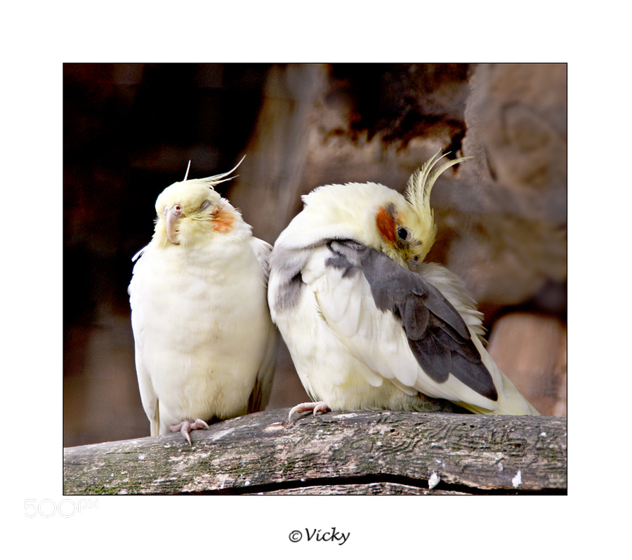Photograph a couple by Vicky Dens on 500px