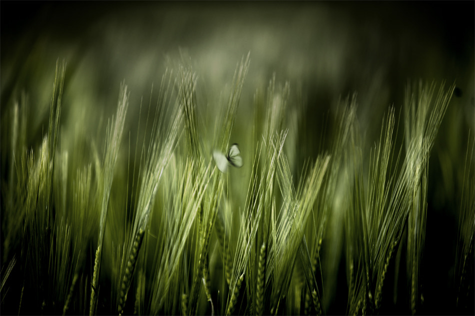 Photograph On wheat by Francisco García Ramírez on 500px