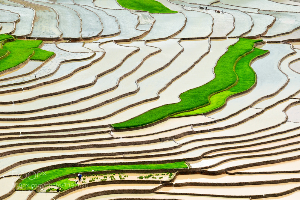Photograph May by Hai Thinh on 500px