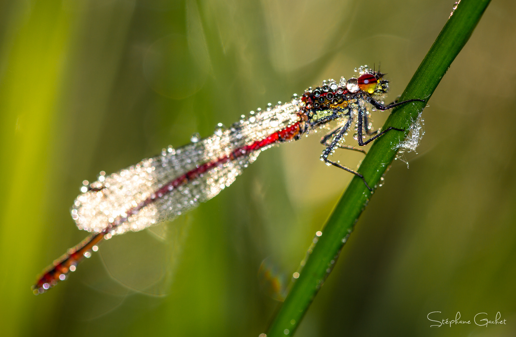 Photograph Humidagrion by Stéphane Gachet on 500px
