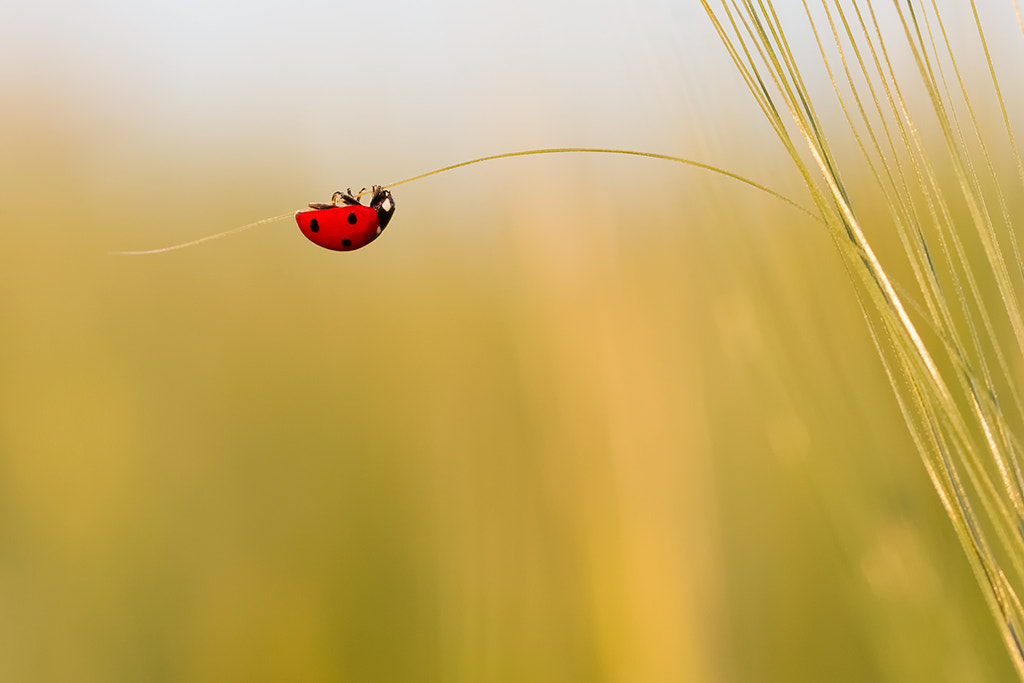 Photograph Lady by DOUCHE Ludovic on 500px