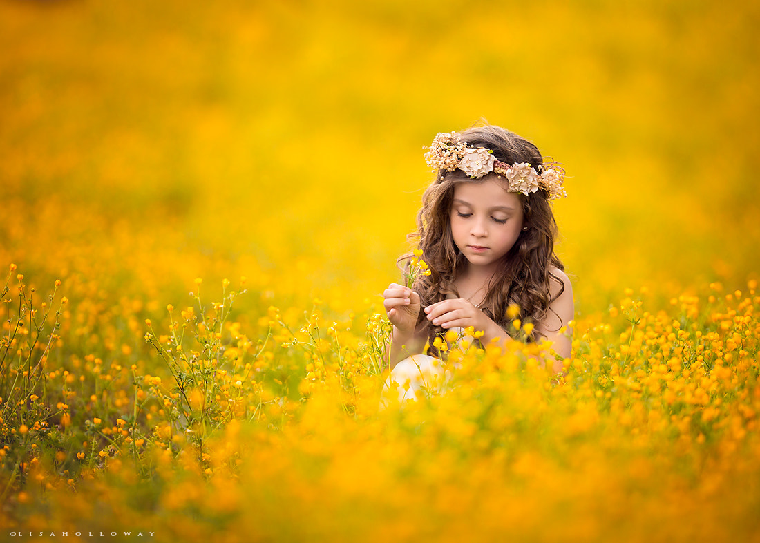 Photograph Field of Gold by Lisa Holloway on 500px