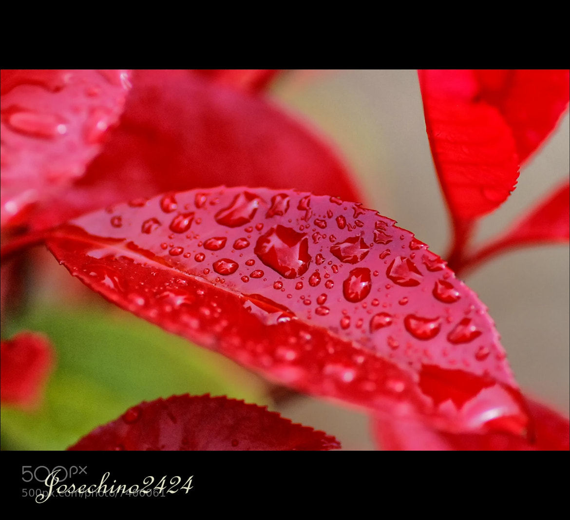 Photograph Rain on red by Jose Maria Ramos Montero on 500px