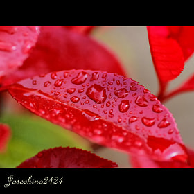 Rain on red by Jose Maria Ramos Montero (Josechino2424)) on 500px.com
