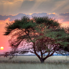 Постер, плакат: Sunset over the Kalahari Central Kalahari Game Reserve Botswan