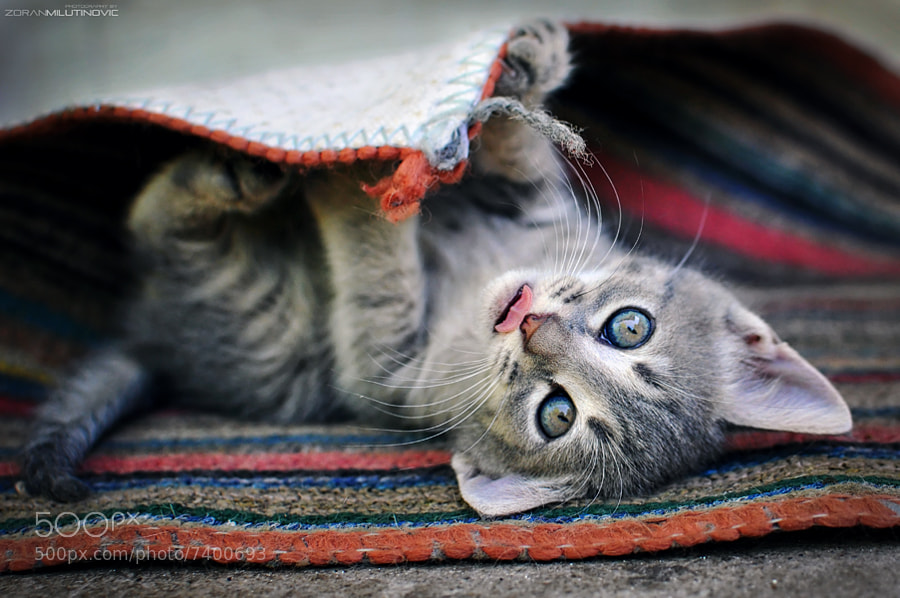 Photograph Play with me by Zoran Milutinovic on 500px