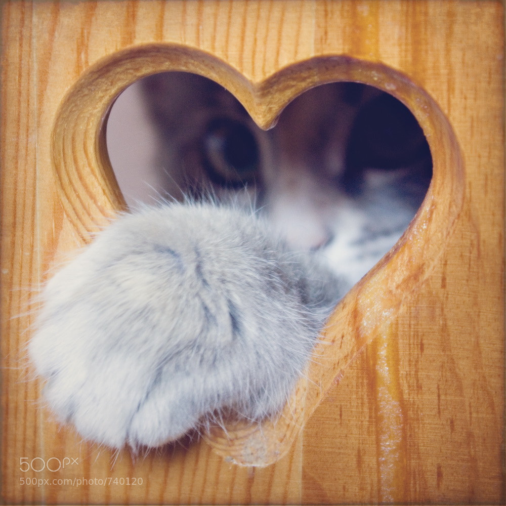 Photograph cat in the heart by Oksana Ariskina on 500px