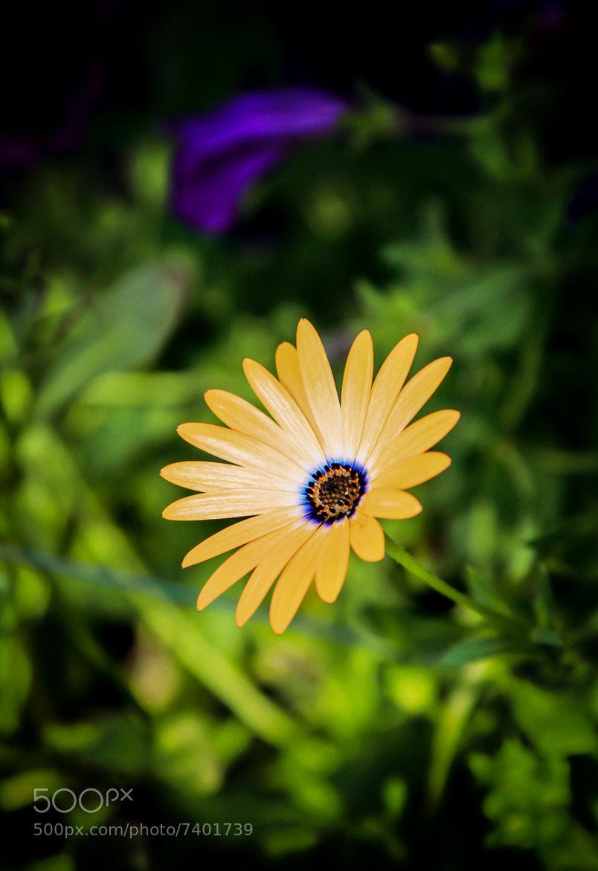Photograph Orange Sympathy by Michelle  Schultz on 500px