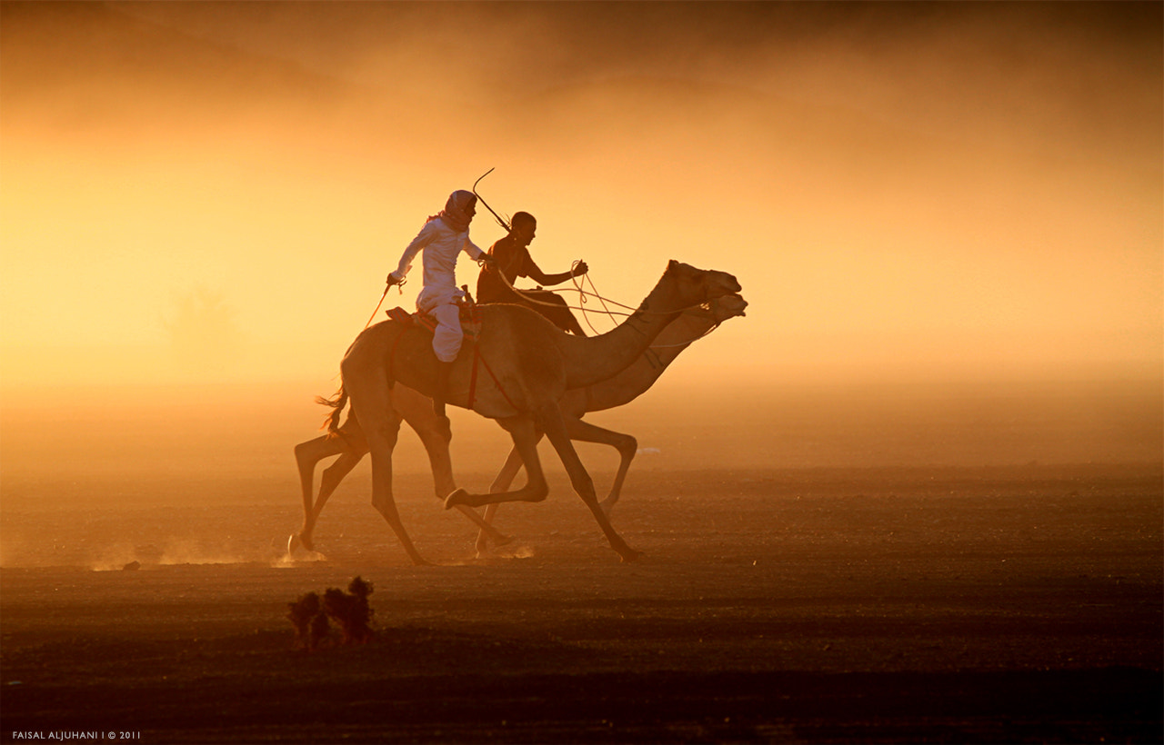 Photograph Ship of the desert by Faisal Aljuhani on 500px