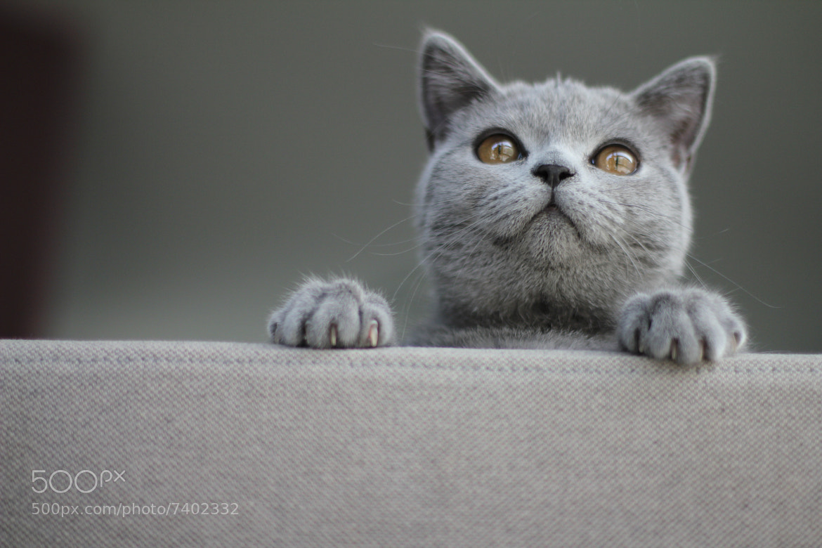 Photograph Cat Wiki by Peter Van den Wyngaert on 500px