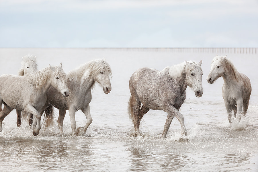 Photograph quite horses by Marco Carmassi on 500px