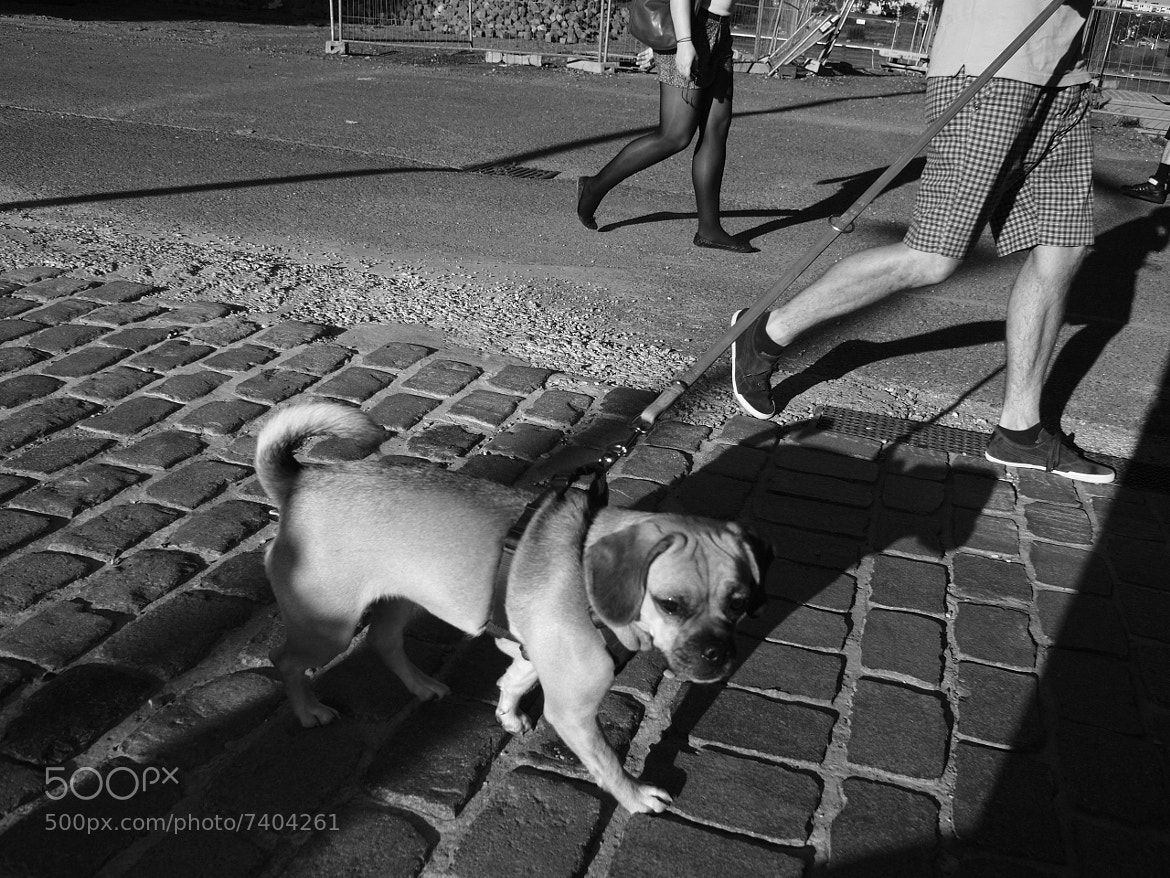 Photograph Dogshadow  by Tim Fitzler on 500px