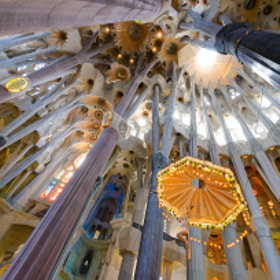 """""""Trees and branches"""" of the apse of Sagrada Família, HDR from 3 exposures (handheld), Barcelona, Spain"""