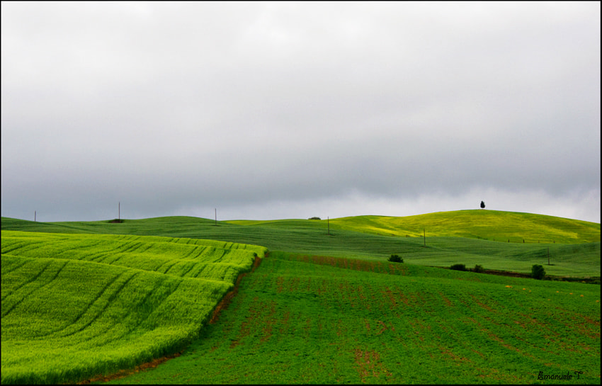 Photograph Green tones by Emanuele Torrisi on 500px