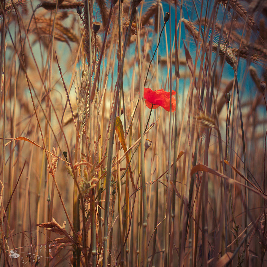 Page 1   Summer by Ildiko Neer. Published by Trony on Saturday, 11 April 2015 in Art and Design (Design's Factory)