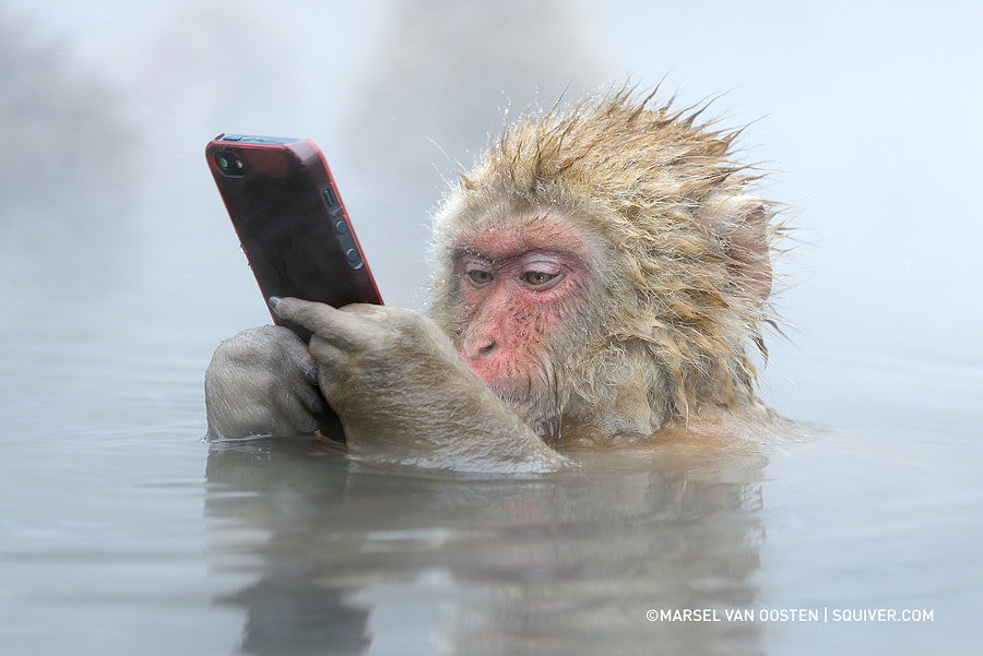 Photograph Facebook Update by Marsel van Oosten on 500px