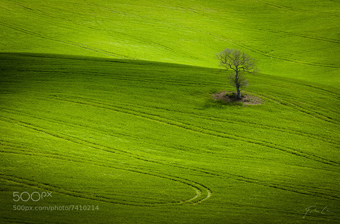 Photograph Tree by Csaba Tökölyi on 500px