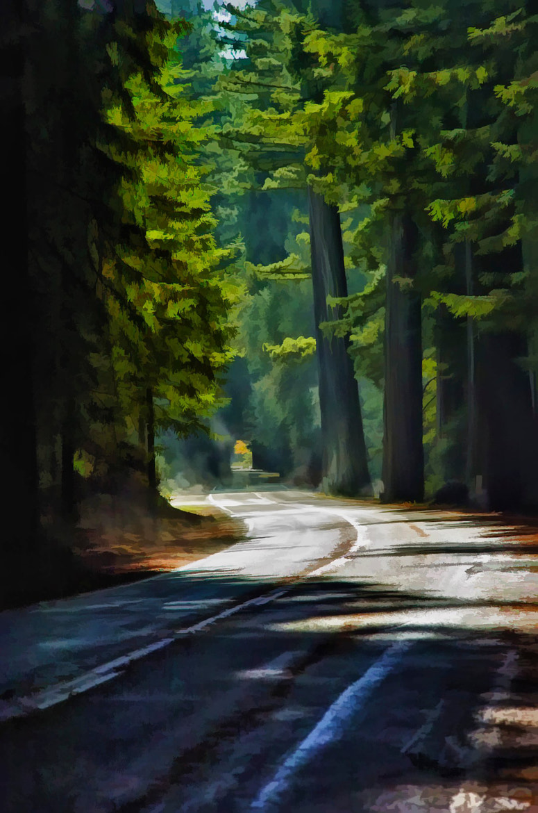 Photograph Redwood Road by Howard George on 500px