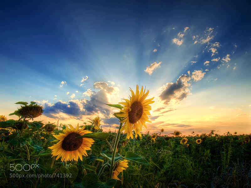 Photograph Glory by Zsolt Zsigmond on 500px