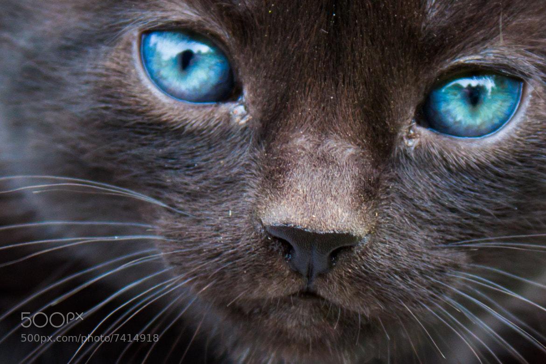 Photograph Kitten by Jade Watt on 500px