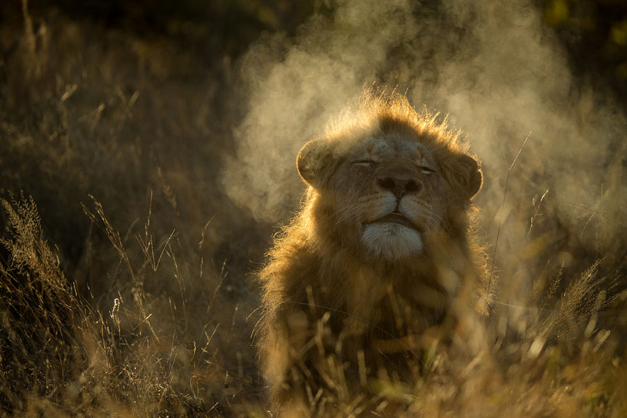 Fire Breather by Marlon du Toit on 500px