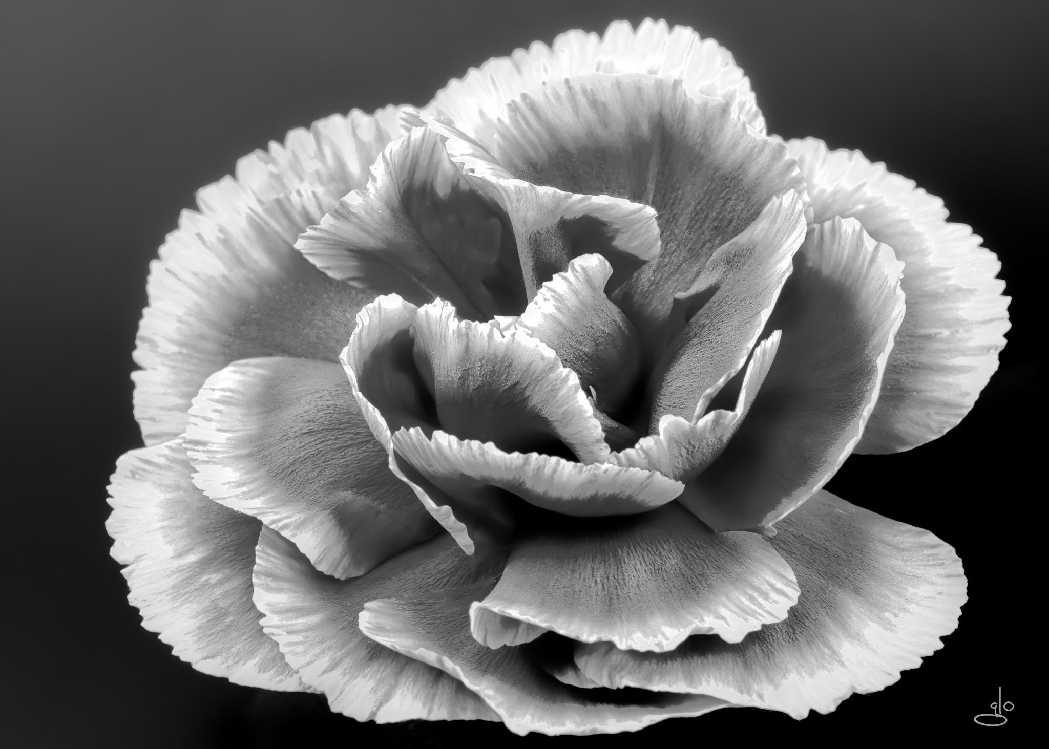 Photograph Monochrome beauty by Glo Photography on 500px