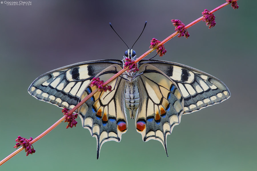 Photograph Spread  your wings by Giacomo Checchi on 500px