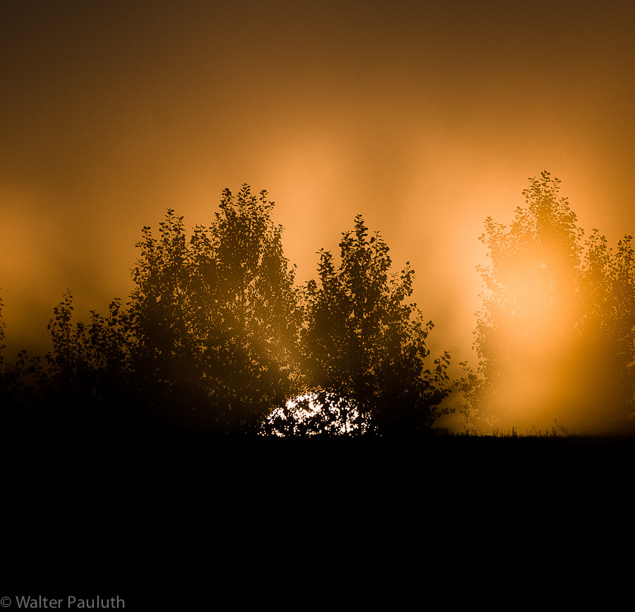 Photograph The sun rises by Walter Pauluth on 500px