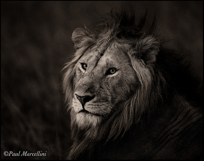 Photograph The King in Monochrome by Paul Marcellini on 500px