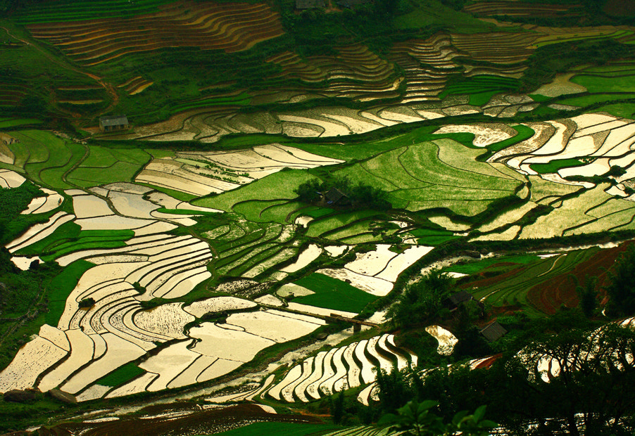Photograph rice fields by Le Huy on 500px