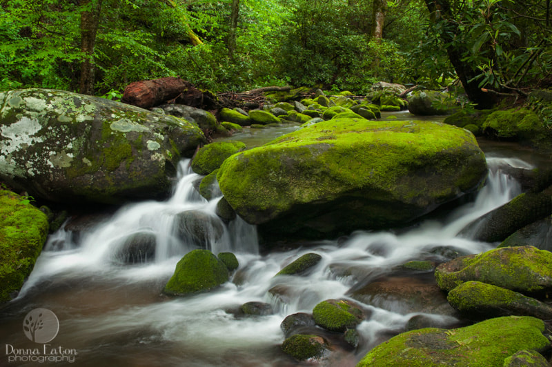 Photograph Mossy Stream by Donna Eaton on 500px