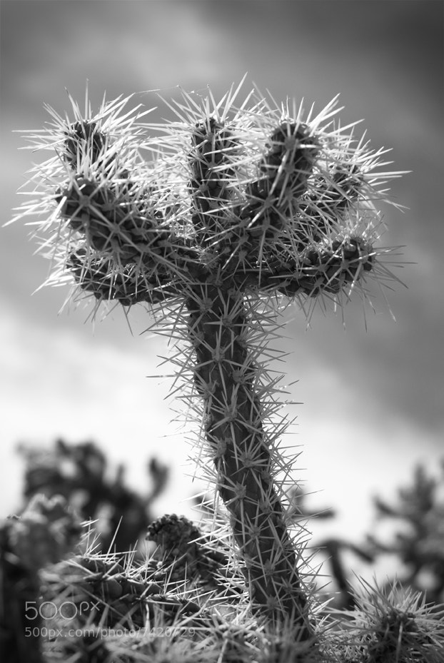 Photograph Cactus by Lindsay Kaun on 500px