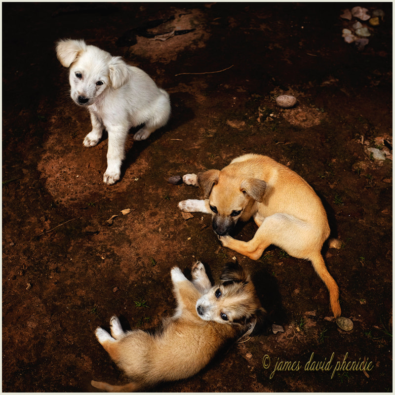 Jungle Puppies