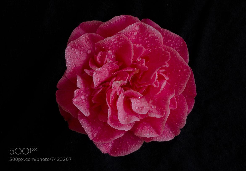 Photograph Beauty in the dark by Jaypee Verdaguer on 500px