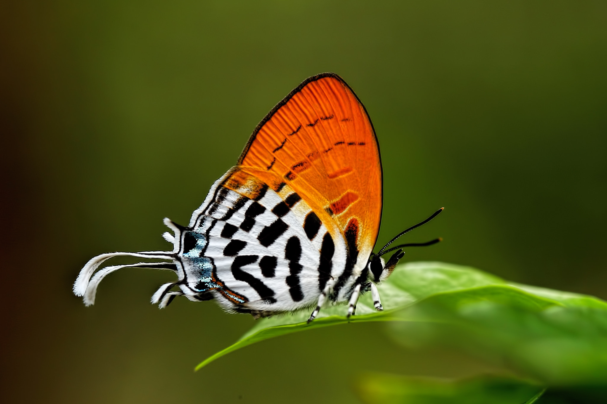 Photograph Butterfly by Sam Tobing on 500px