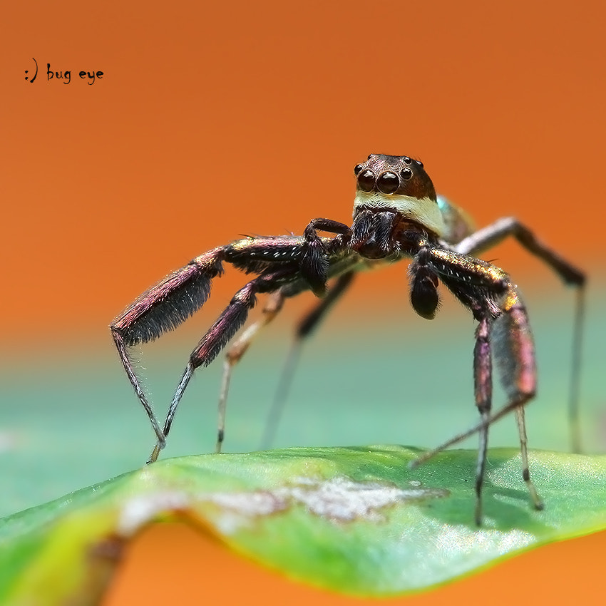 Photograph cowboy coming ! by bug eye :) on 500px