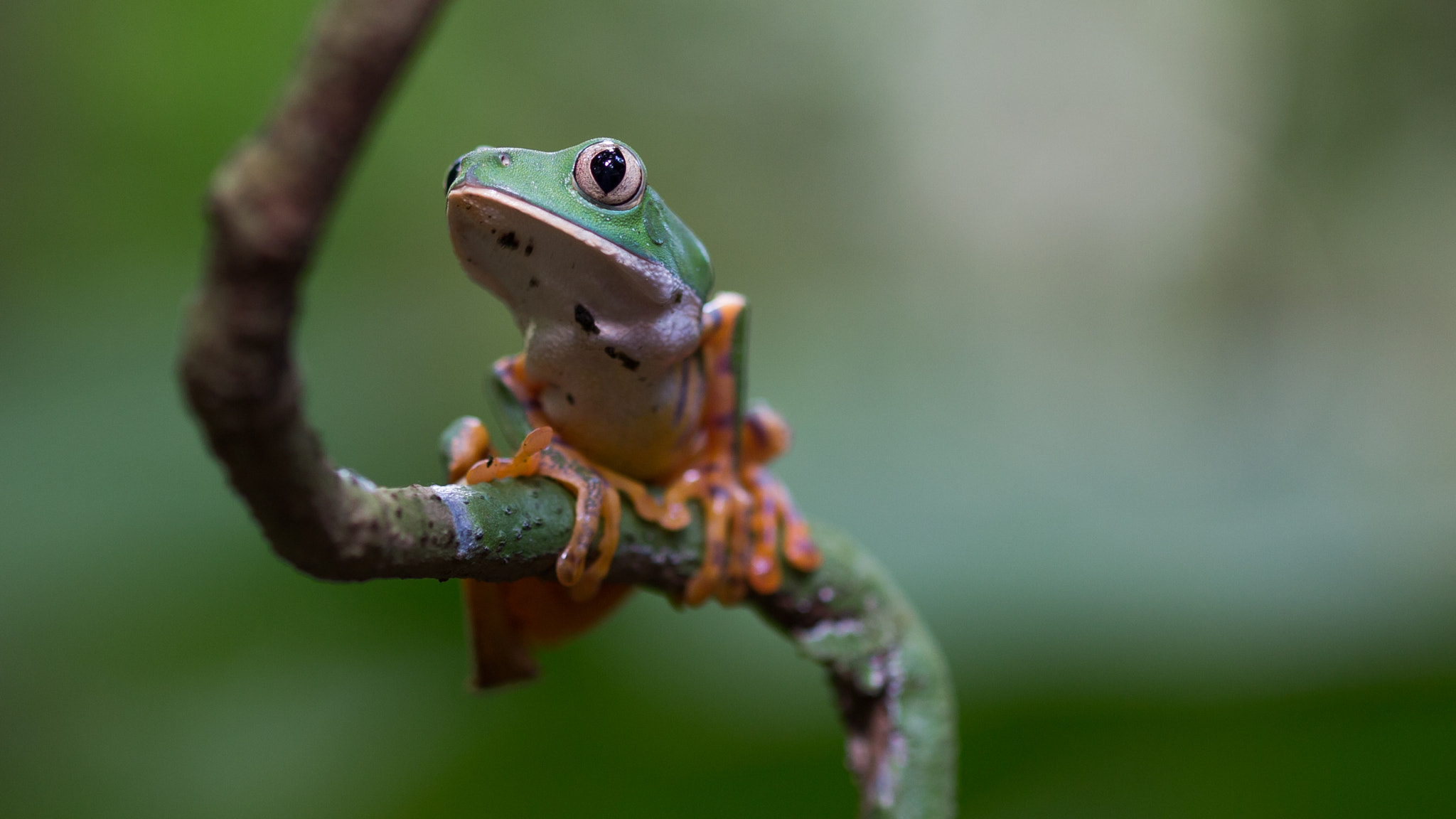 Photograph Frog by Rita Caluori on 500px